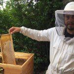 Bienenwaben der Burgbienen