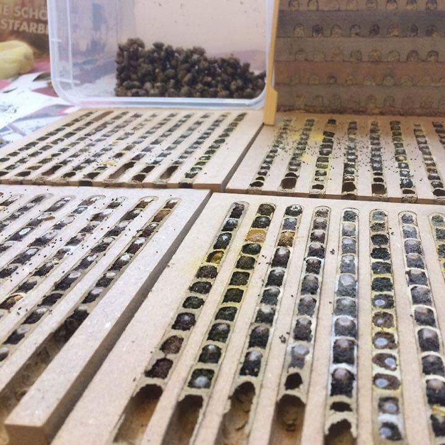 Bienenlarve spinnt Kokon