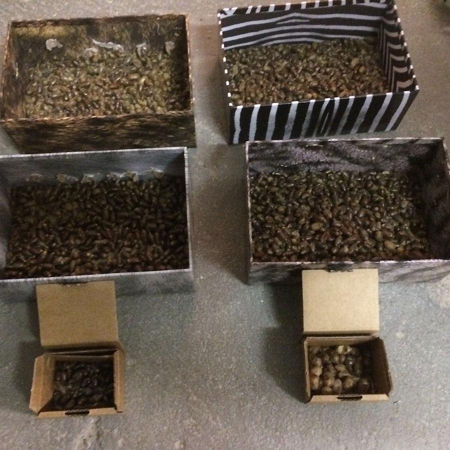 Überwinterung der Mauerbienen