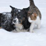 Pfotensalbe für Hund und Katze