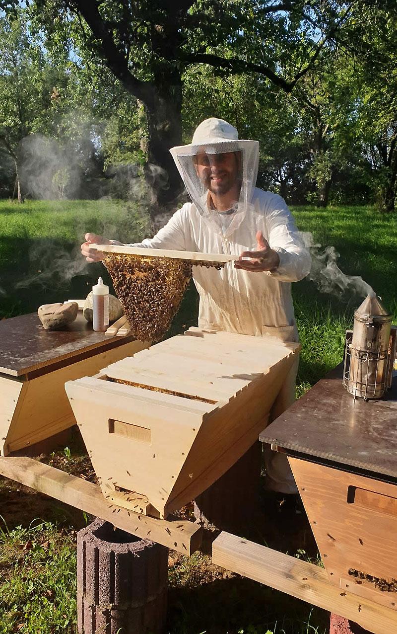 Beim-Arbeiten-Bienenbarke