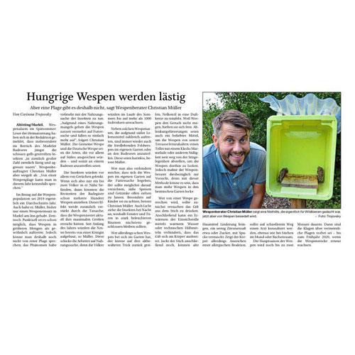 Hungrige Wespen werden lästig