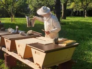 Arbeit-Bienenbarke