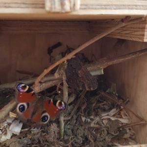 BEEButterfly-Hotel-Schmetterling