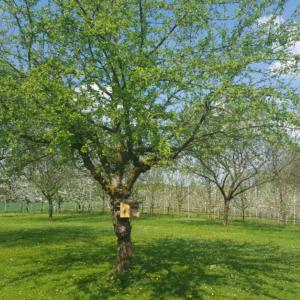 BeeWild-Obstgarten