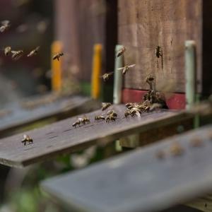 Bienen-Anflug-Bienenstock