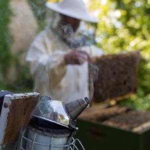 Bienen-Rauch