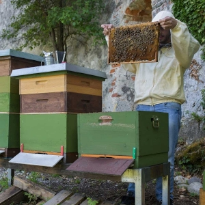 Bienenpatenschaft-Burgbienen