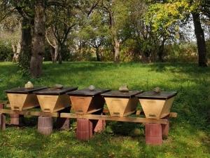 Bienenstand-mit-Bienenbarken