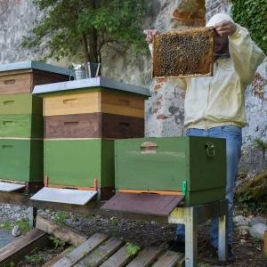 Bienenstoecke-auf-der-Burg