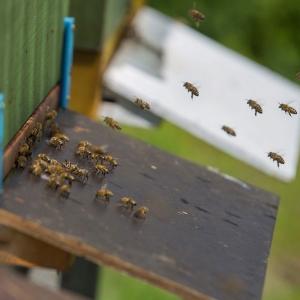 Burgbienen-Bienenstock