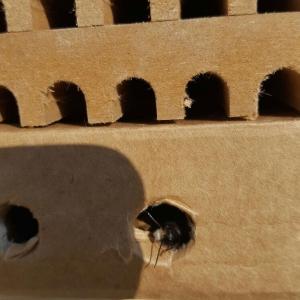 Mauerbiene-Nistgaenge