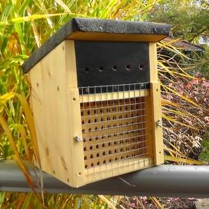 Nistkasten-Mauerbienen