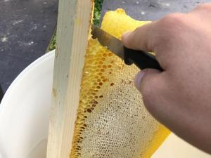Schneiden-der-Honigwabe