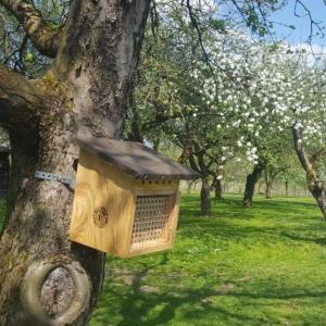 Wildbienen-Niestkasten