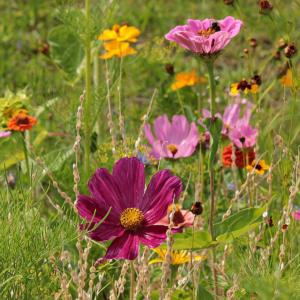 bunte-Wiesenblumen